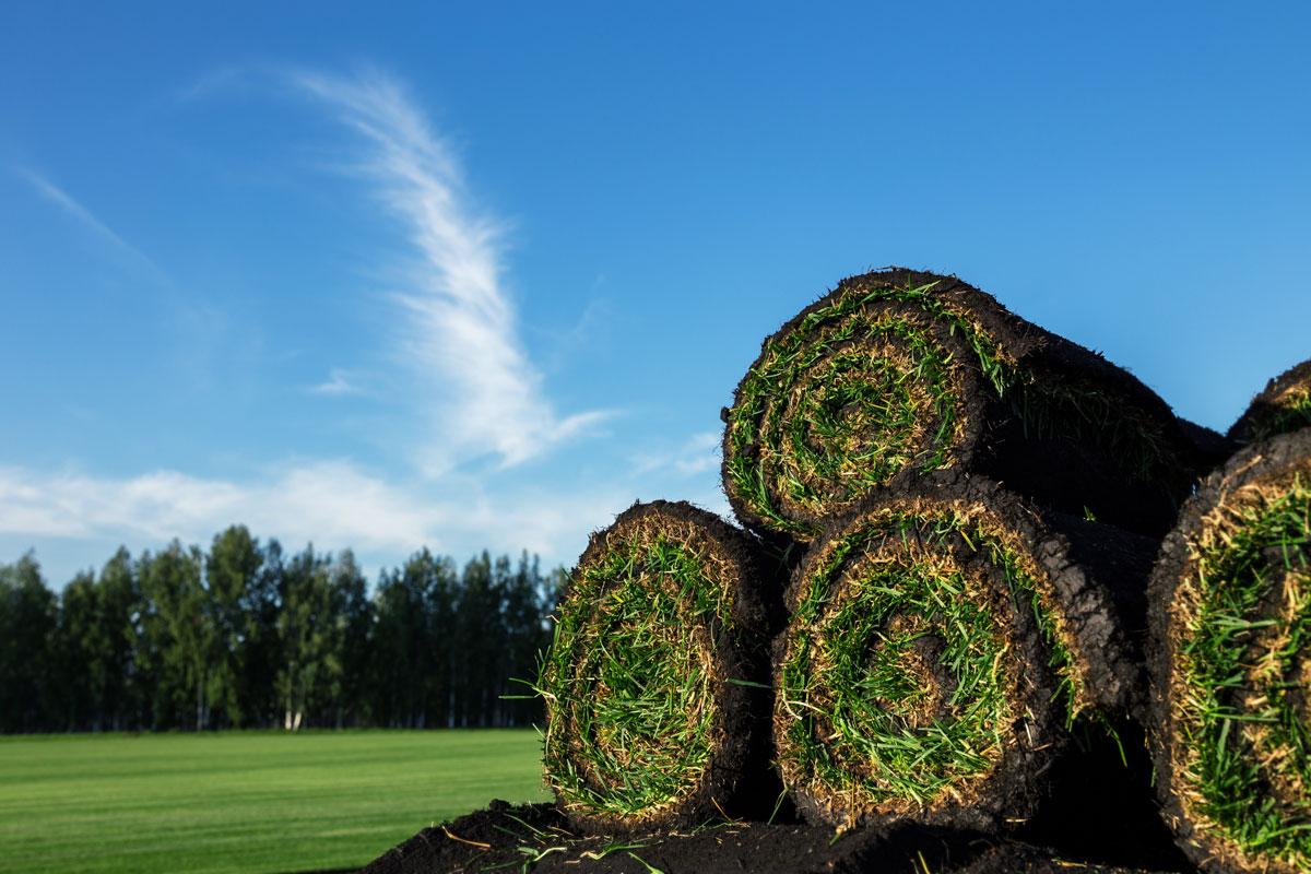 Navigate Homes Sod Lawn Maintenance
